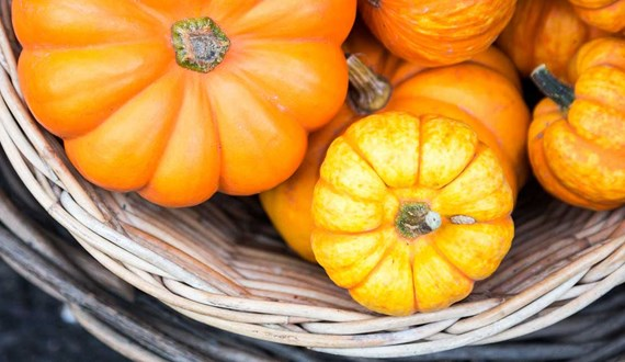 Why You Should Fall for Pumpkin This Season