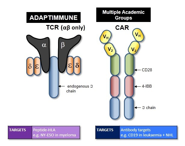 Adoptive cell transfer using TCR technology (Reference: Fujiwara H. Pharmaceuticals 2014, 7(12), 1049-1068)