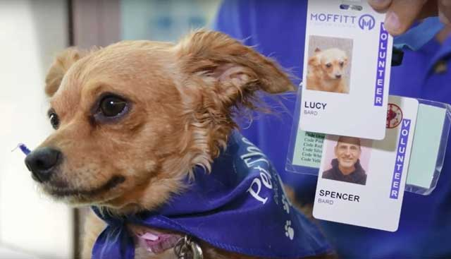 Pet-Therapy-Lucy-with-Badge.jpg